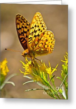 Backcountry Butterfly Greeting Card