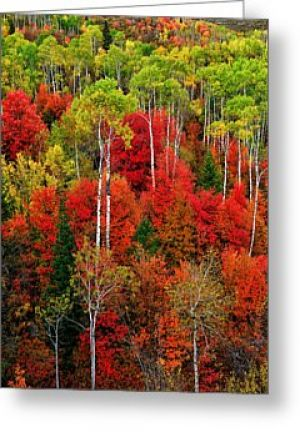 Idaho Autumn Greeting Card