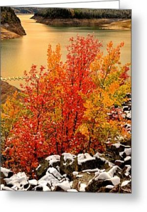 Palisades Maples Greeting Card
