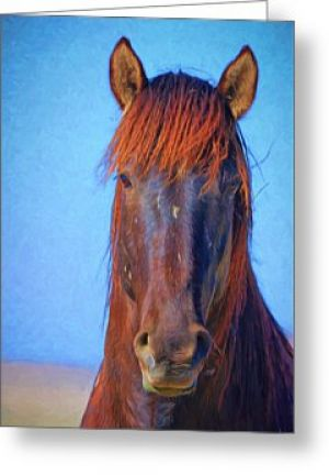 Wild Stallion Portrait Greeting Card