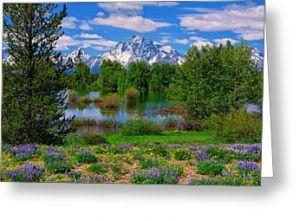 Pilgrim Creek Greeting Card