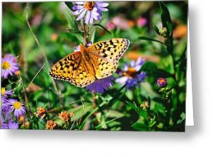 Teton Butterfly Greeting Card