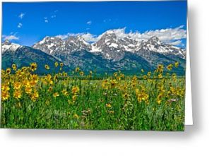 Tetons Peaks and Flowers Greeting Card